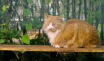 It's a Catio, Daddio! A Video Tour Led by the Feline Himself
